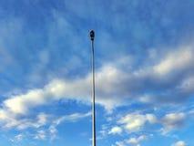 βακκινίων Στοκ φωτογραφία με δικαίωμα ελεύθερης χρήσης