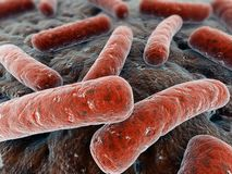 βακτηρίδια απεικόνιση αποθεμάτων