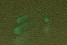 Βακτηρίδια Ecoli Στοκ Φωτογραφίες