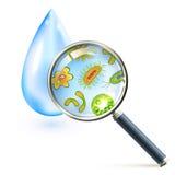 Βακτηρίδια Magnifier και κύτταρα ιών διανυσματική απεικόνιση