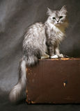 βαλίτσα γατών Στοκ Εικόνες