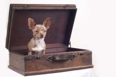 βαλίτσα σκυλιών στοκ φωτογραφίες με δικαίωμα ελεύθερης χρήσης