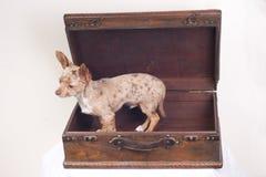 βαλίτσα σκυλιών στοκ εικόνα με δικαίωμα ελεύθερης χρήσης