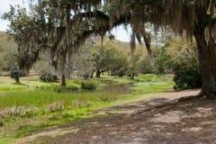 βαλανιδιά bayou πέρα από τα δέντρ&alph Στοκ εικόνες με δικαίωμα ελεύθερης χρήσης