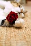 βαλεντίνος γατών Στοκ εικόνες με δικαίωμα ελεύθερης χρήσης