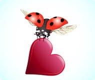 βαλεντίνος καρδιών ladybug s ημέρ&alph Στοκ φωτογραφία με δικαίωμα ελεύθερης χρήσης