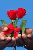 βαλεντίνος τριαντάφυλλ&omeg Στοκ Εικόνες
