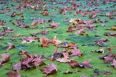 Βαλς φθινοπώρου στοκ εικόνα