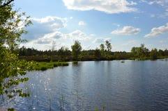 Βαλτότοπος με τη λίμνη και τα δέντρα στοκ εικόνες