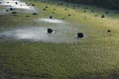 Βαμμένος mossy τομέας με τα κούτσουρα γύρω στοκ φωτογραφίες με δικαίωμα ελεύθερης χρήσης