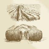 Βαρέλια, αμπελώνας, συγκομιδή, αγρόκτημα Στοκ Φωτογραφία