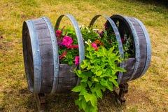 Βαρέλι κρασιού που χρησιμοποιείται ως κιβώτιο καλλιεργητών Στοκ εικόνα με δικαίωμα ελεύθερης χρήσης