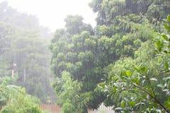 Βαριά βροχή στο τροπικό δάσος Στοκ εικόνα με δικαίωμα ελεύθερης χρήσης