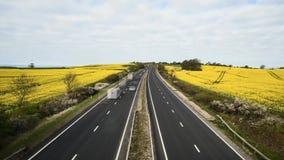 Βαριά κυκλοφορία στον αγροτικό αυτοκινητόδρομο μεταξύ του ανθίζοντας τομέα συναπόσπορων απόθεμα βίντεο