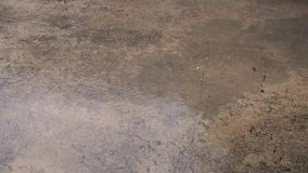 Βαριά πτώση σταγόνων βροχής Πτώσεις βροχής στο τσιμέντο πατωμάτων παλαιός τοίχος σύστασης τούβλου ανασκόπησης κλείστε επάνω απόθεμα βίντεο