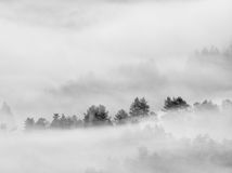 Βαριά υδρονέφωση στο τοπίο Θαυμάσια κρεμώδης ομίχλη φθινοπώρου Στοκ εικόνες με δικαίωμα ελεύθερης χρήσης