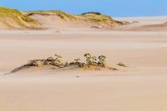 Βαριά φυσώντας άμμος αέρα στην παραλία ενάντια στον παράκτιο ορίζοντα Στοκ εικόνες με δικαίωμα ελεύθερης χρήσης
