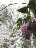 Βαριά χτυπήματα Chisinau χιονοπτώσεων στη μέση της άνοιξη στοκ εικόνα