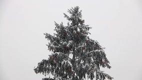 Βαριές χιονοπτώσεις με τα κωνοφόρα φιλμ μικρού μήκους