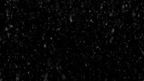 Βαριές χιονοπτώσεις σε ένα μαύρο υπόβαθρο για τη μεταφορά σε μια φωτογραφία ή ένα βίντεο του χειμερινού καιρού περιτυλιγμένος απόθεμα βίντεο