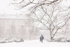 βαριές χιονοπτώσεις Στοκ Εικόνες