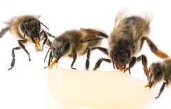 Βασίλισσα μελισσών - οι εργαζόμενοι μητέρων και μελισσών πίνουν το μέλι στοκ φωτογραφίες
