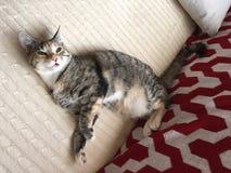 Βασίλισσα Cleo η χαλάρωση γατών Στοκ Εικόνες