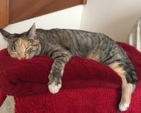 Βασίλισσα Cleo ο ύπνος γατών Στοκ φωτογραφία με δικαίωμα ελεύθερης χρήσης