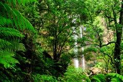 Βασίλισσα Mary Falls του Queensland Στοκ Εικόνες