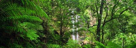 Βασίλισσα Mary Falls του Queensland Στοκ Εικόνα