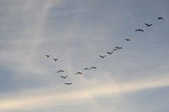 Βασικά πουλιά στον ουρανό Στοκ Εικόνες