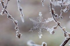 Βασικά φύλλα σημύδων Στοκ Φωτογραφίες