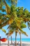 Βασικοί φοίνικες ΗΠΑ παραλιών της δυτικής Φλώριδας Smathers Στοκ εικόνες με δικαίωμα ελεύθερης χρήσης