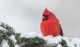 βασικός βόρειος χειμώνα&sigma Στοκ φωτογραφία με δικαίωμα ελεύθερης χρήσης