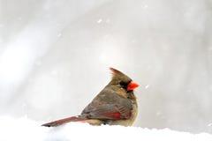 βασικός χιονώδης στοκ εικόνες