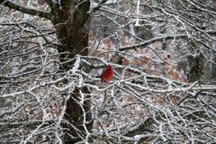 βασικό κόκκινο χιόνι Στοκ φωτογραφία με δικαίωμα ελεύθερης χρήσης