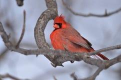 Βασικό πουλί Στοκ Εικόνα