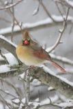 βασικό χιόνι Στοκ φωτογραφίες με δικαίωμα ελεύθερης χρήσης