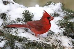 βασικό χιόνι Στοκ Φωτογραφίες