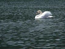Βασιλιάς της λίμνης Στοκ Φωτογραφία