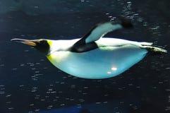 βασιλιάς penguin που κολυμπά Στοκ φωτογραφία με δικαίωμα ελεύθερης χρήσης