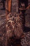 Βασιλική κουκουβάγια στοκ εικόνες