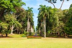 Βασιλικοί βοτανικοί κήποι Peradeniya στοκ φωτογραφίες