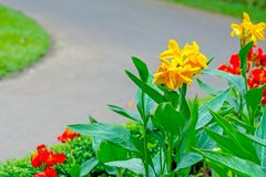 Βασιλικός βοτανικός κήπος Peradeniya, Σρι Λάνκα Στοκ Φωτογραφίες