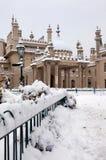 βασιλικός χειμώνας χιον&iot στοκ εικόνες με δικαίωμα ελεύθερης χρήσης