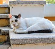 Βασιλοπρεπής άγρια γάτα Στοκ εικόνα με δικαίωμα ελεύθερης χρήσης