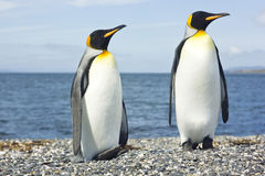 Βασιλιάς δύο pinguins κοντά στη θάλασσα Στοκ φωτογραφία με δικαίωμα ελεύθερης χρήσης