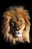 βασιλιάς Στοκ Εικόνα