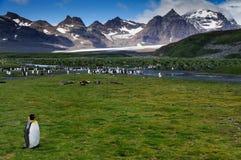 Βασιλιάς Penguins στις πεδιάδες του Σαλίσμπερυ στοκ φωτογραφία