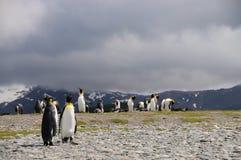 Βασιλιάς Penguins στις πεδιάδες του Σαλίσμπερυ στοκ φωτογραφίες